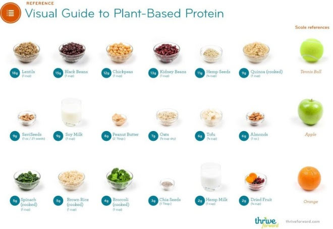 visual-guide-to-plant-based-protein